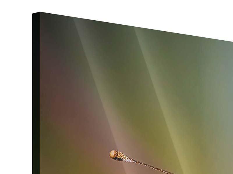Acrylglasbild 3-teilig Der C-Falter