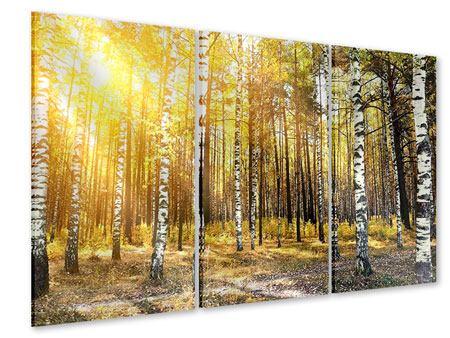 Acrylglasbild 3-teilig Birkenwald
