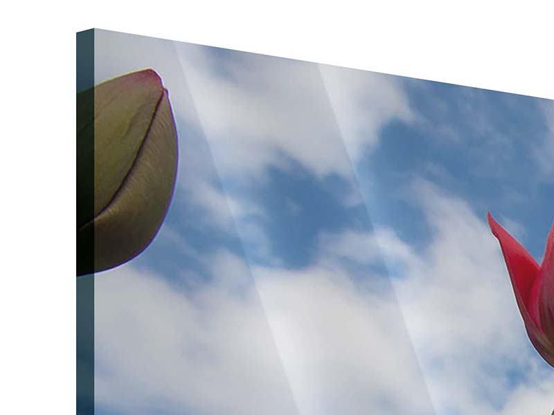 Acrylglasbild 3-teilig Tulpen im Himmel