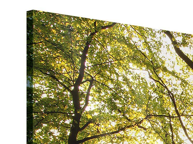 Acrylglasbild 3-teilig Sonnenuntergang zwischen den Bäumen