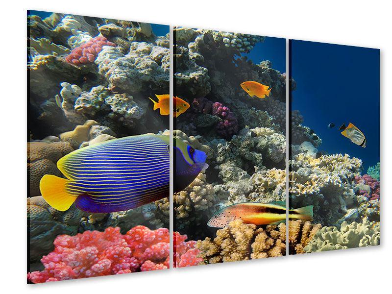 Acrylglasbild 3-teilig Das Aquarium