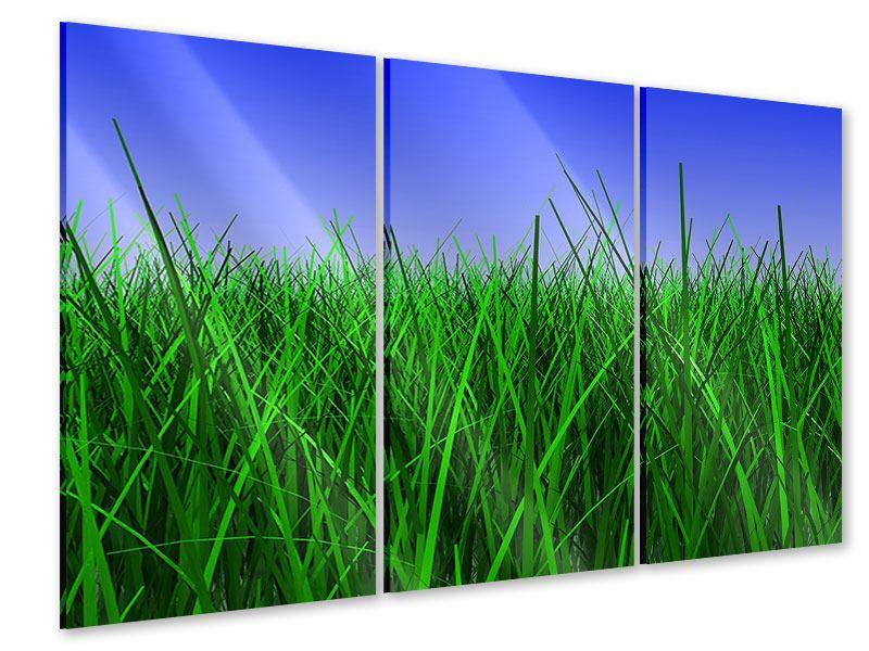 Acrylglasbild 3-teilig Im Gras
