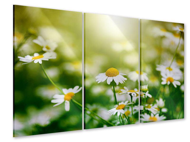Acrylglasbild 3-teilig Die Gänseblümchen