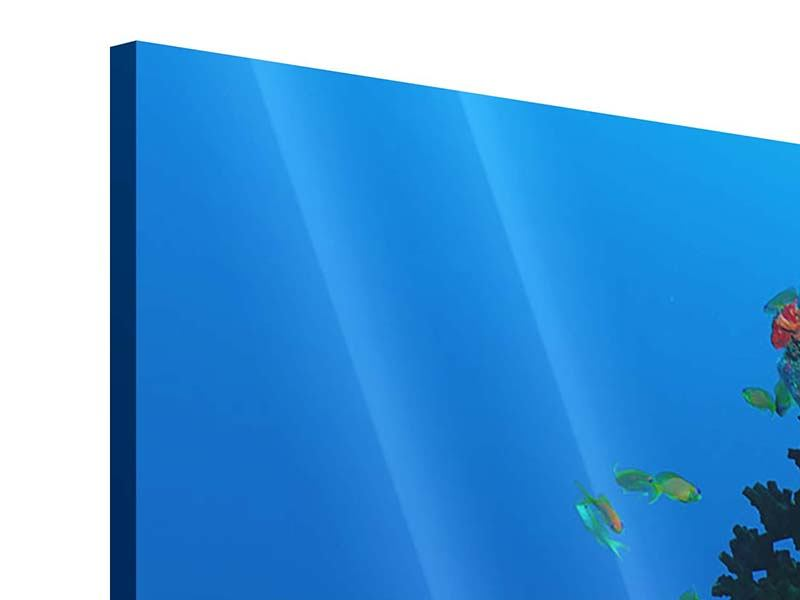 Acrylglasbild 3-teilig Die Welt der Fische