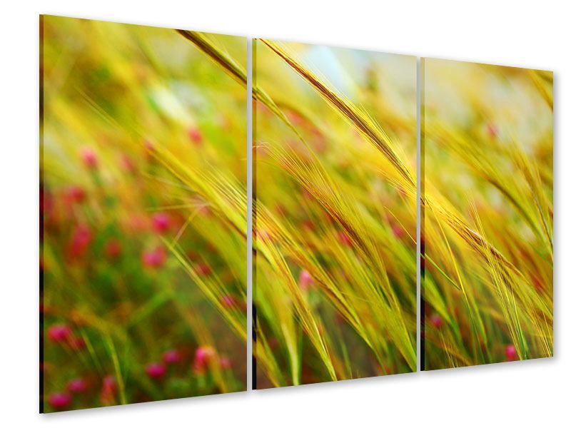 Acrylglasbild 3-teilig Das Weizenfeld