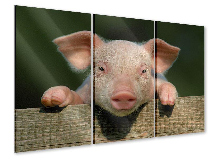 Acrylglasbild 3-teilig Schweinchen Namens Babe