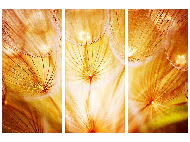Acrylglasbild 3-teilig Close Up Pusteblume im Licht