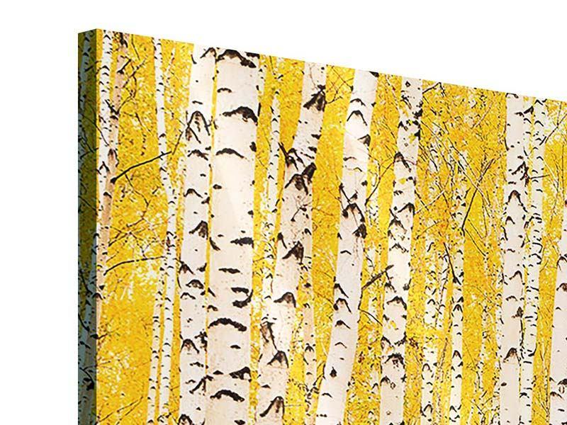 Acrylglasbild 3-teilig Der Birkenwald im Herbst