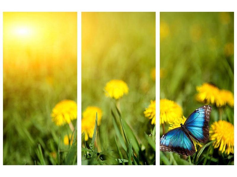 Acrylglasbild 3-teilig Der Löwenzahn und der Schmetterling
