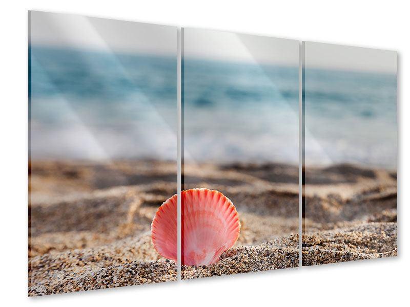 Acrylglasbild 3-teilig Die Muschel