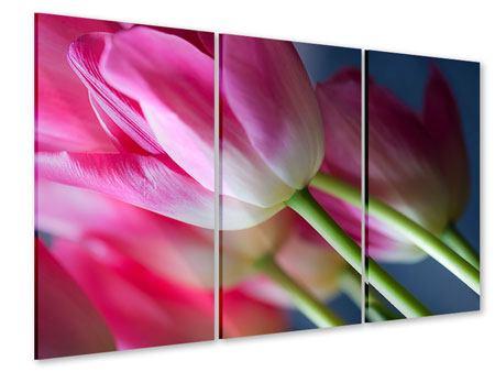 Acrylglasbild 3-teilig Makro Tulpen