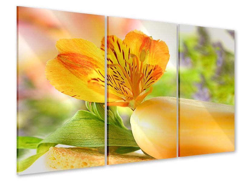 Acrylglasbild 3-teilig Lilien-Frühstück