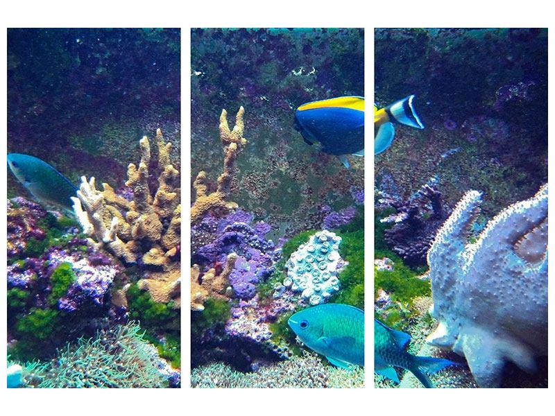 Acrylglasbild 3-teilig Fische