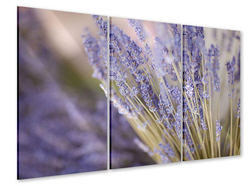 Acrylglasbild 3-teilig Lavendel XXL