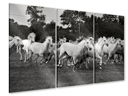 Acrylglasbild 3-teilig Die Mustang Herde