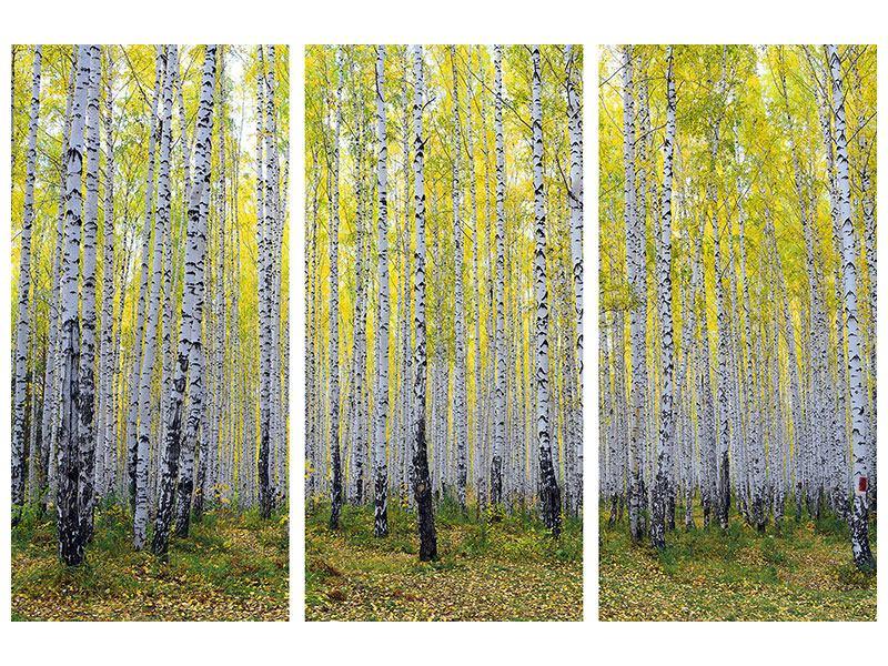 Acrylglasbild 3-teilig Herbstlicher Birkenwald