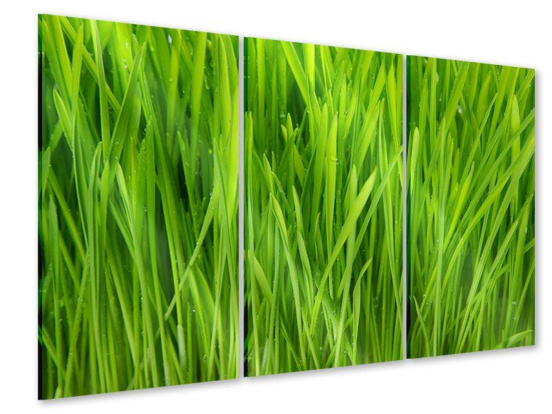 Acrylglasbild 3-teilig Grashalme im Morgentau