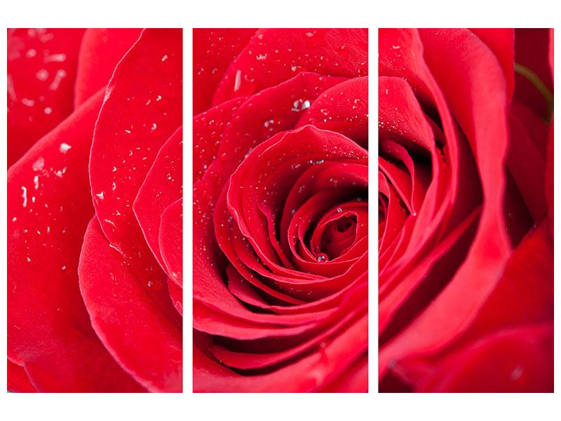 Acrylglasbild 3-teilig Rote Rose im Morgentau