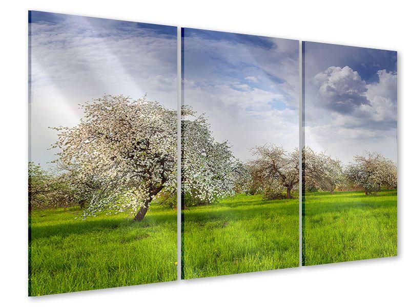 Acrylglasbild 3-teilig Apfelbaum-Garten