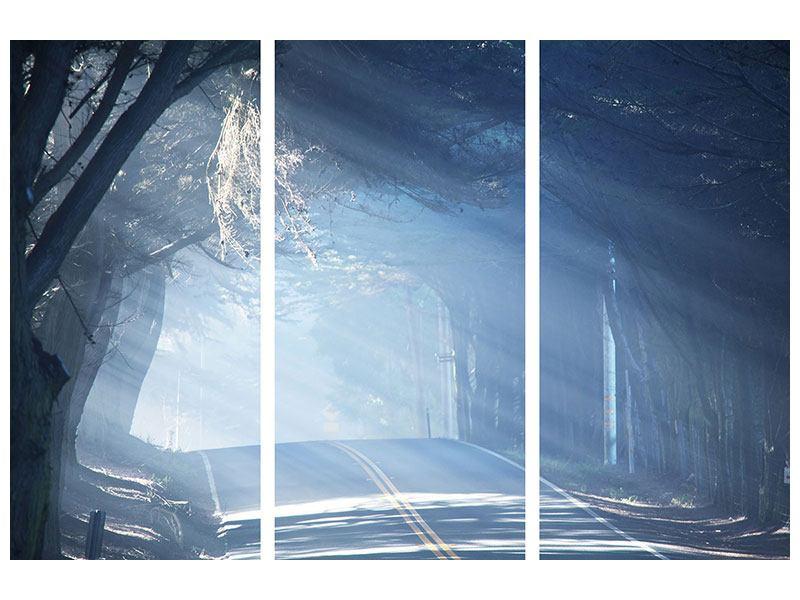 Acrylglasbild 3-teilig Lichtdurchflutete Baumallee