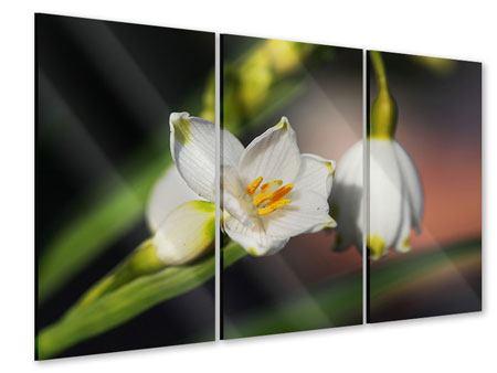 Acrylglasbild 3-teilig Schneeglöckchen XXL