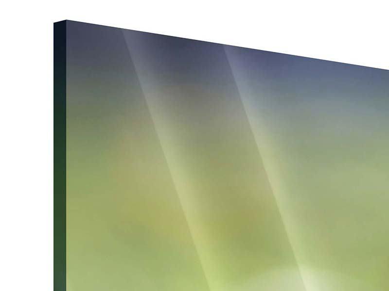 Acrylglasbild 3-teilig Die Blütenknospe