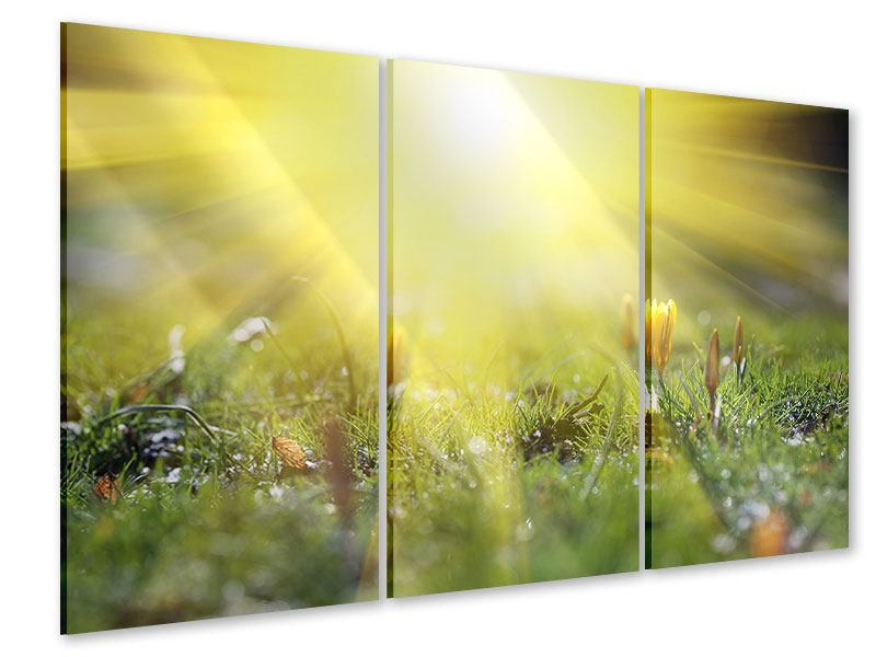 Acrylglasbild 3-teilig Blumige Wiese