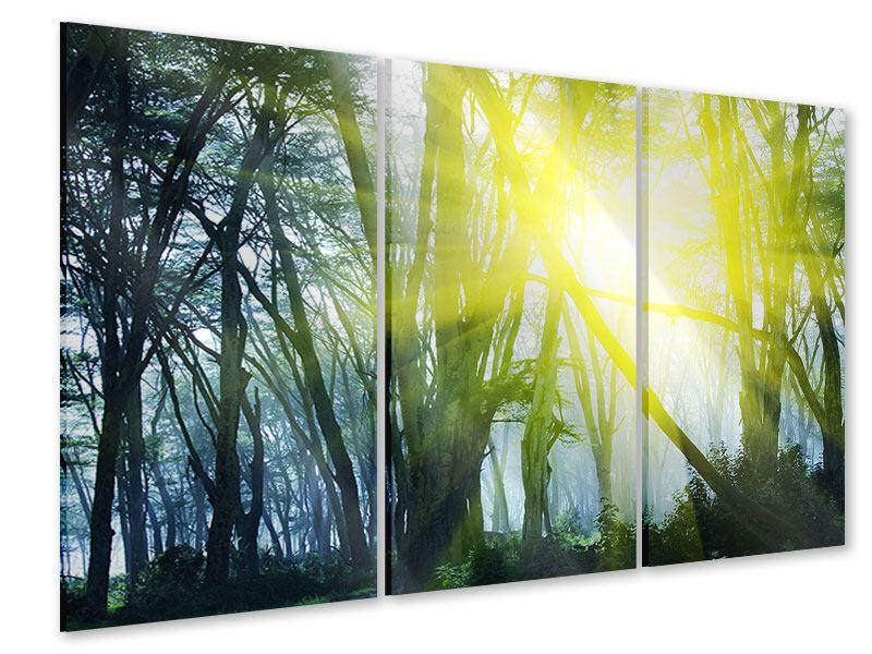 Acrylglasbild 3-teilig Sonnenstrahlen im Wald