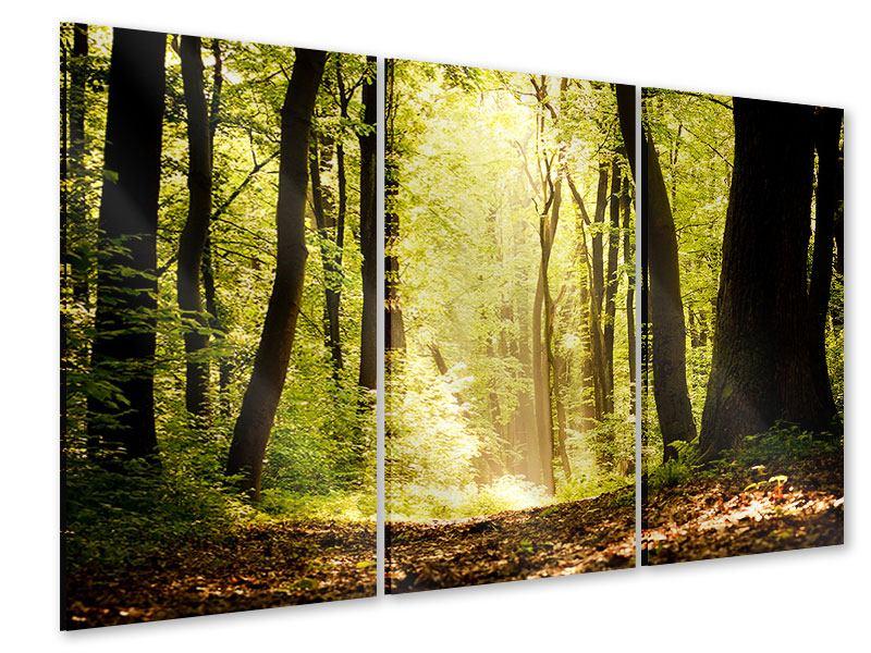 Acrylglasbild 3-teilig Sonnenaufgang im Wald