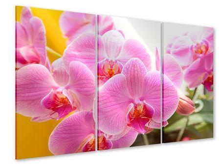 Acrylglasbild 3-teilig Königliche Orchideen