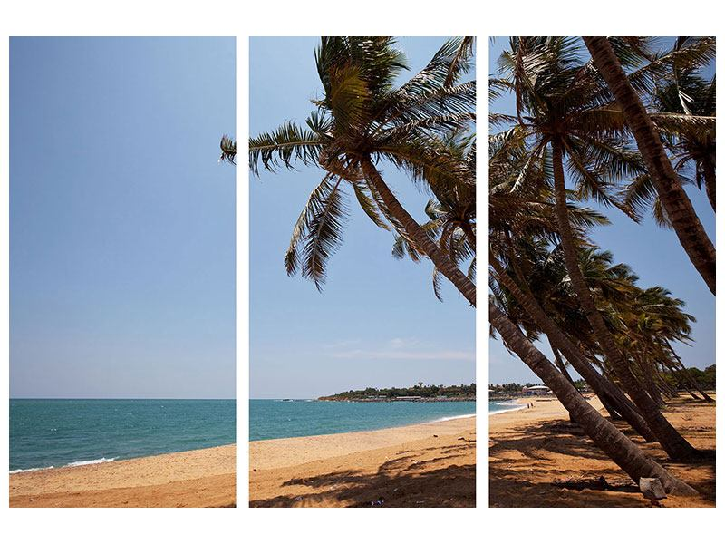 Acrylglasbild 3-teilig Palmblätter