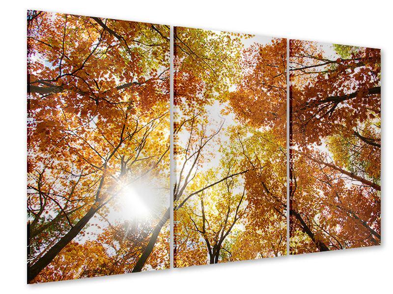 Acrylglasbild 3-teilig Herbstbäume