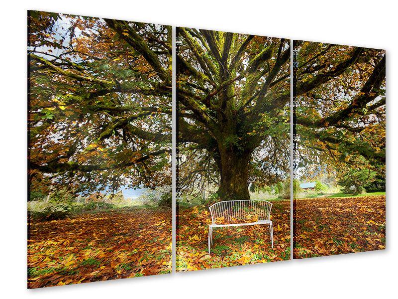 Acrylglasbild 3-teilig Mein Lieblingsbaum