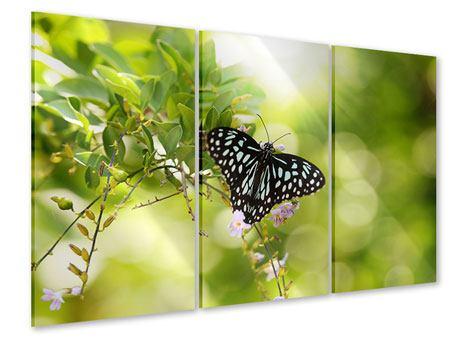Acrylglasbild 3-teilig Papilio Schmetterling XXL