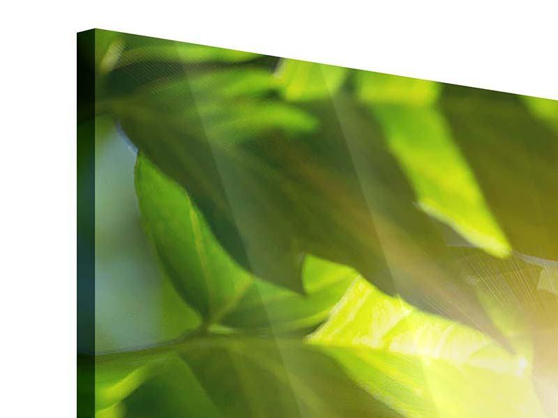 Acrylglasbild 3-teilig Es grünt so grün