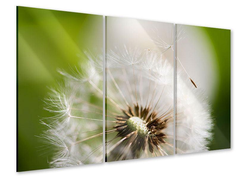 Acrylglasbild 3-teilig Pusteblume Löwenzahn