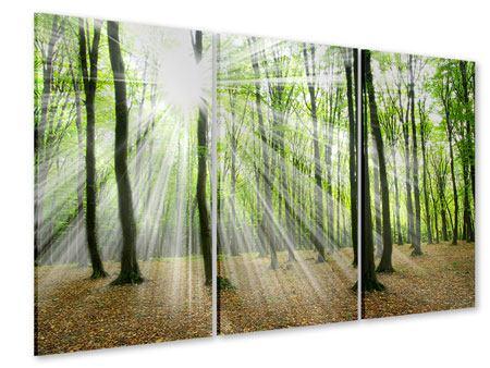 Acrylglasbild 3-teilig Magisches Licht in den Bäumen