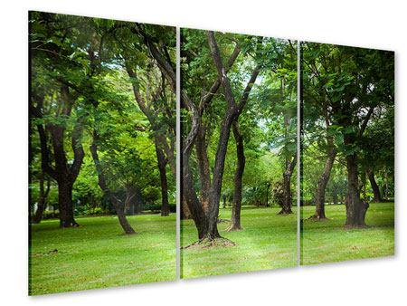 Acrylglasbild 3-teilig Kirschbaum-Garten