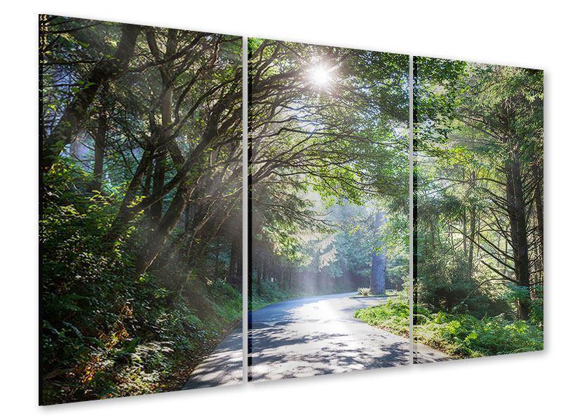 Acrylglasbild 3-teilig Sonniger Waldweg