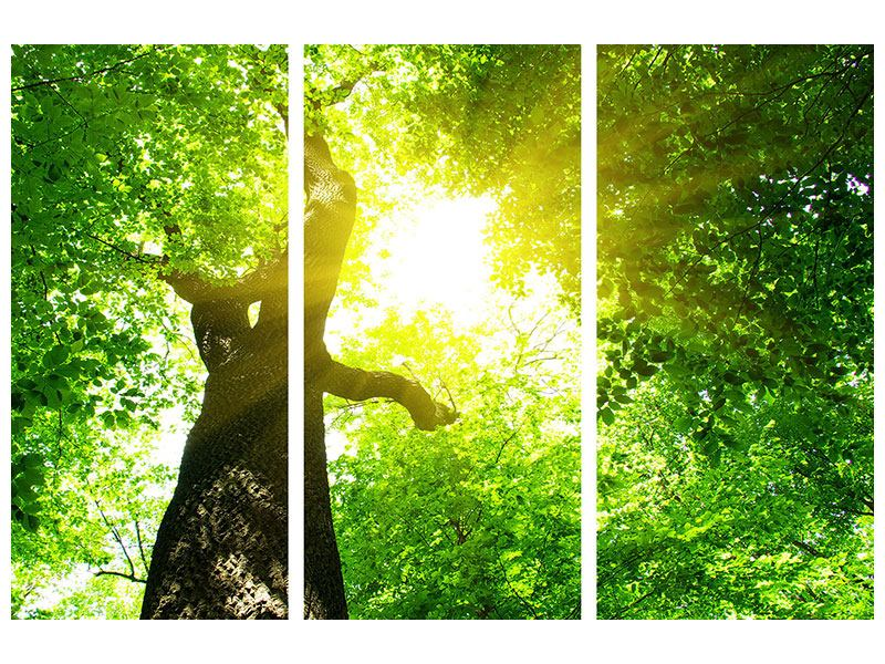Acrylglasbild 3-teilig Baum
