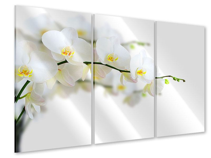 Acrylglasbild 3-teilig Weisse Orchideen