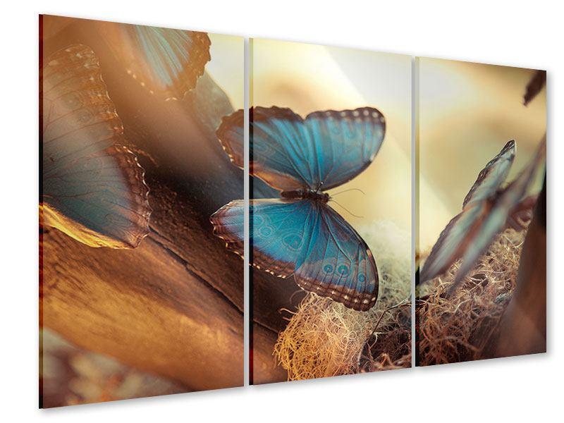 Acrylglasbild 3-teilig Schmetterlinge