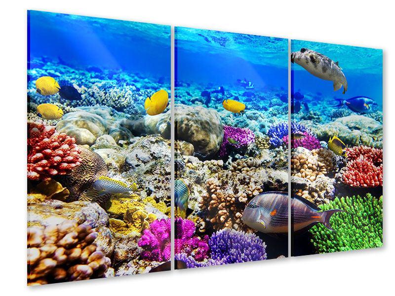 Acrylglasbild 3-teilig Fischaquarium