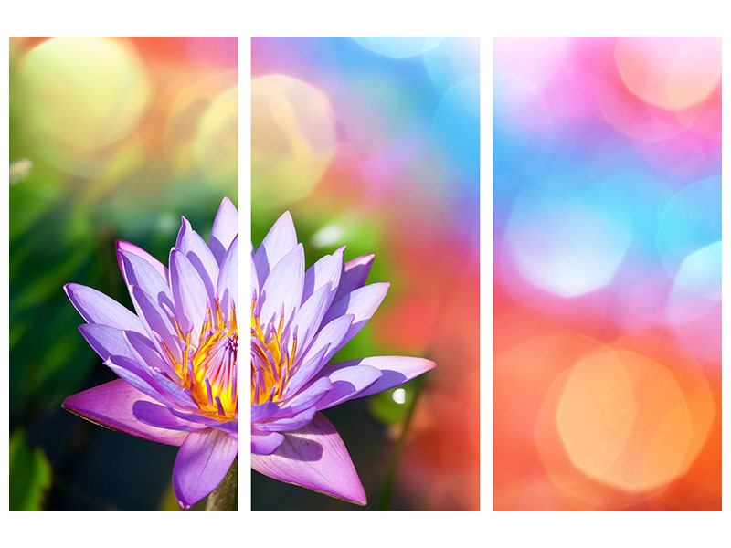 Acrylglasbild 3-teilig Colored Lotus