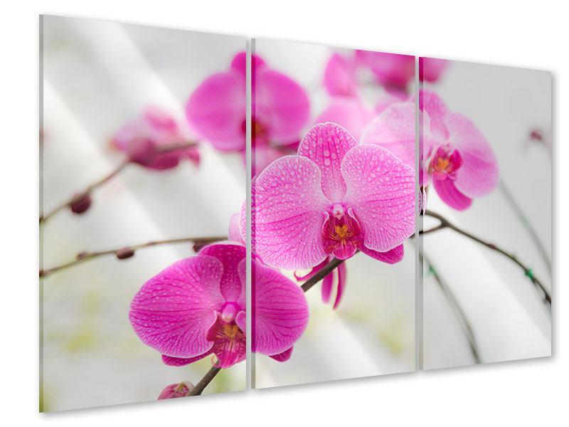 Acrylglasbild 3-teilig Das Symbol der Orchidee