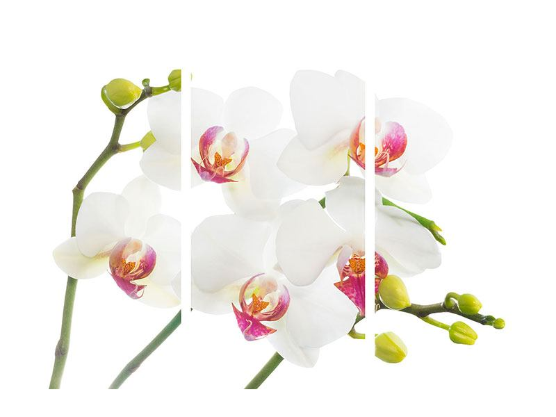Acrylglasbild 3-teilig Orchideenliebe