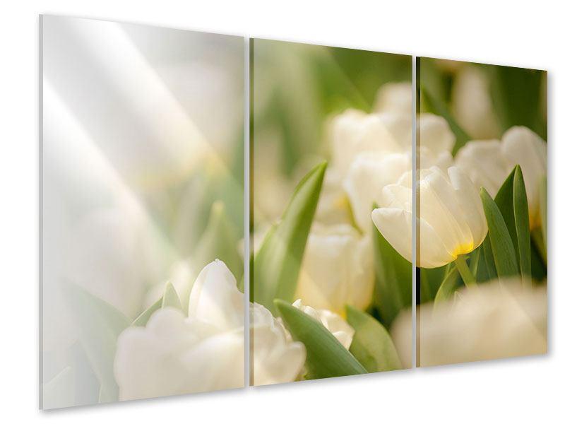 Acrylglasbild 3-teilig Tulpenperspektive
