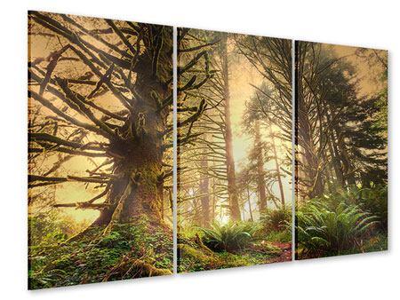 Acrylglasbild 3-teilig Sonnenuntergang im Dschungel