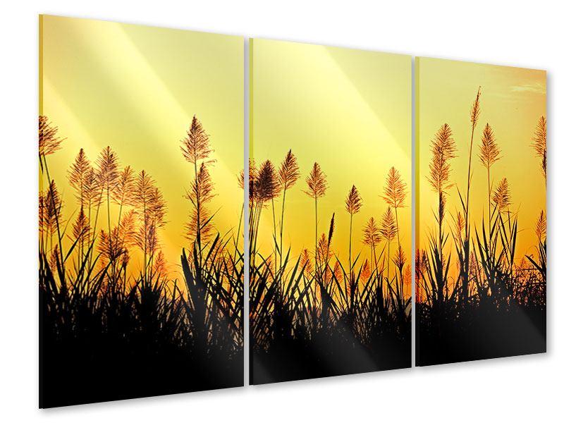 Acrylglasbild 3-teilig Die Blumen des Feldes