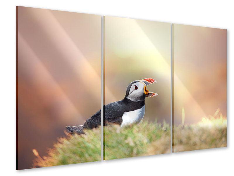 Acrylglasbild 3-teilig Der Papageitaucher